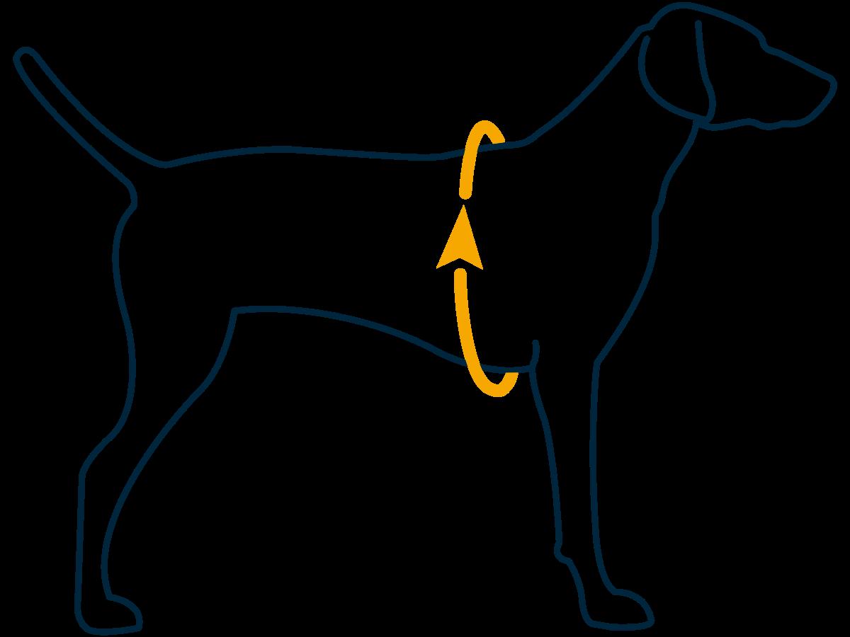Fit Guide Measurement Girth Blue - Ruffwear Jet Stream Dog Cooling Vest Orange